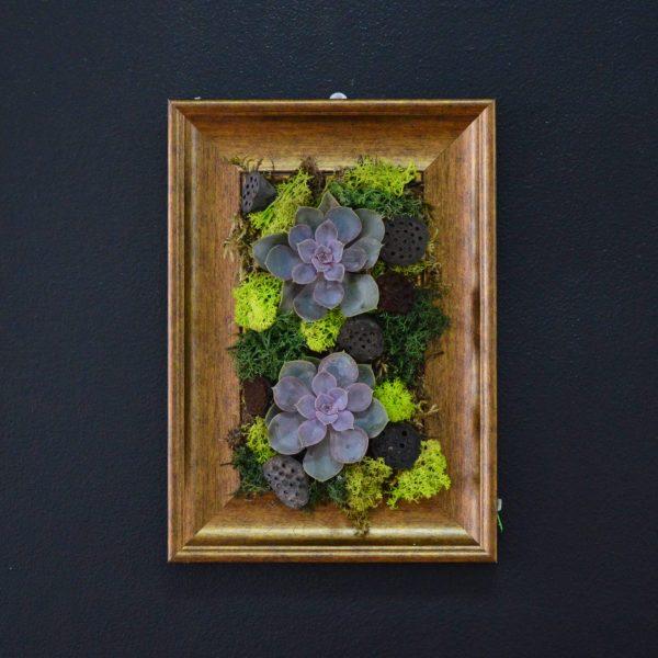 tablou plante suculente si licheeni