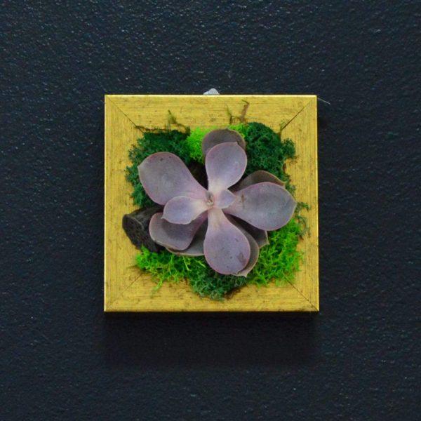 tablou plante suculente si licheni